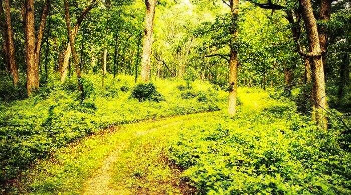 The jungle trails of Lansdowne in Uttarakhand