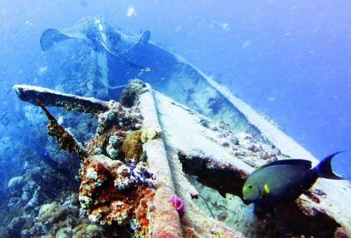 Shipwreck diving at Yongala in Queensland