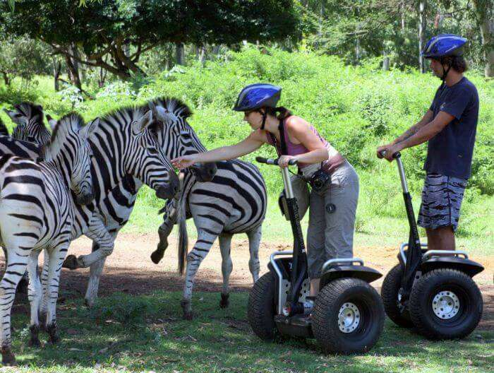 A young couple playing with the zebras during their wildlife safari at Casela World of Adventures