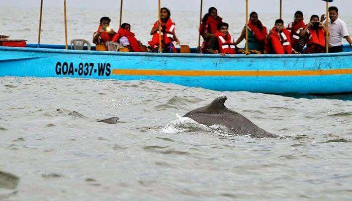 Dolphin Sighting in Goa