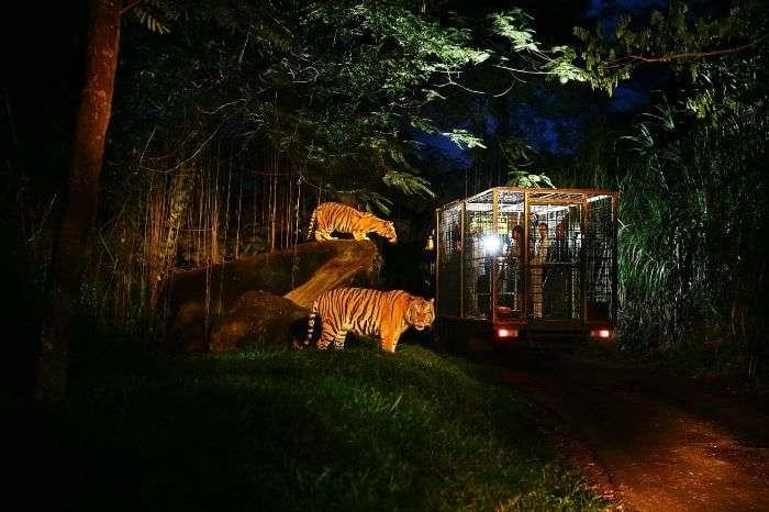 Go in the wild with a night safari in Bali Safari and Marine Park