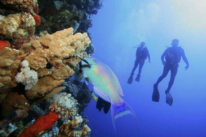 A couple admiring the underwater life while scuba diving in Andaman