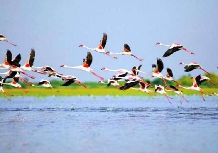 Birds flying over Nalsarovar