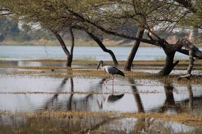 A bird resting in the Thol Lake Bird Sanctuary
