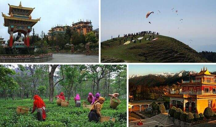 Scenes from the paragliding site, Deer Institute, and tea factory at Bir Billing