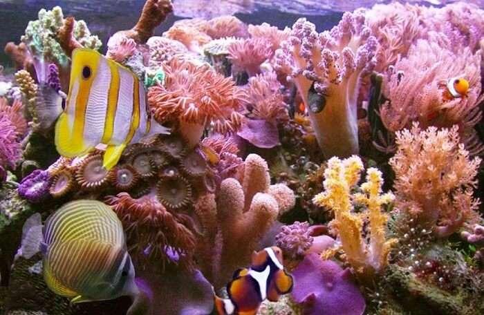 Rich colorful reefs at Bentota