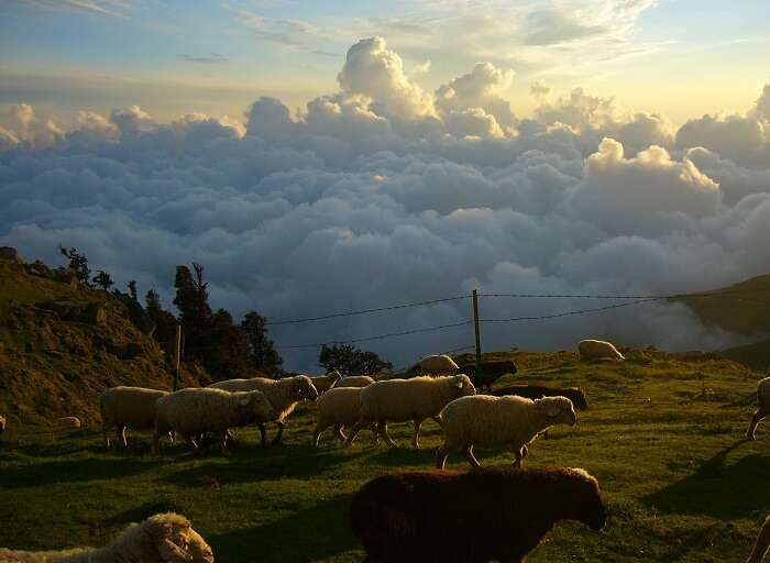 The stunning view at the tip of Triund