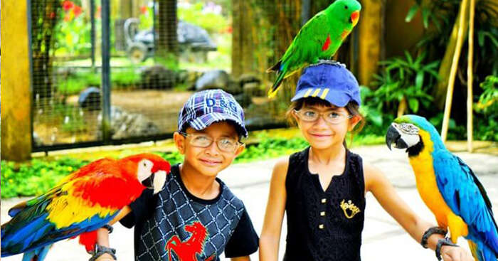 Kids playing with parrots at a bird park in Bali