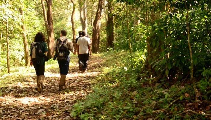 A couple joins a group for nature walking in Thekkady