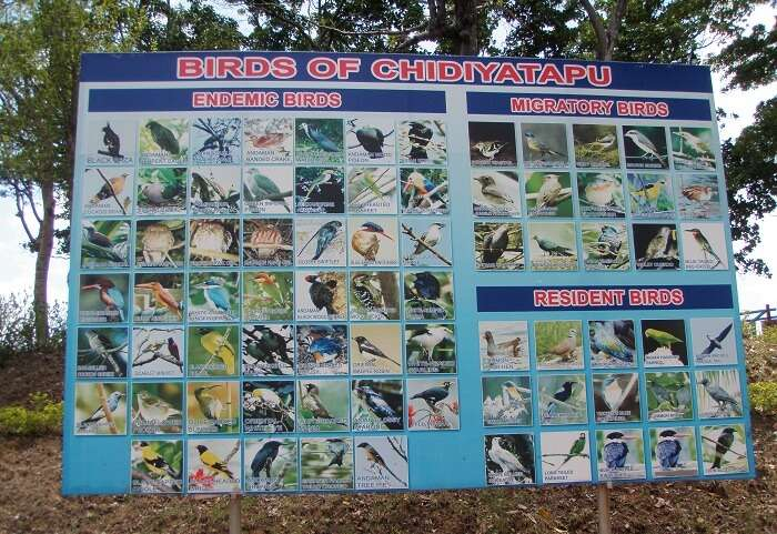 Bird Watching in Andaman