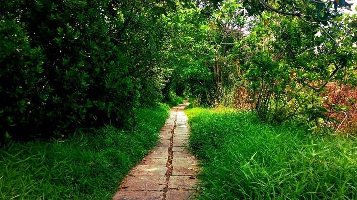 A mysterious trail in the Island of Pathiramanal