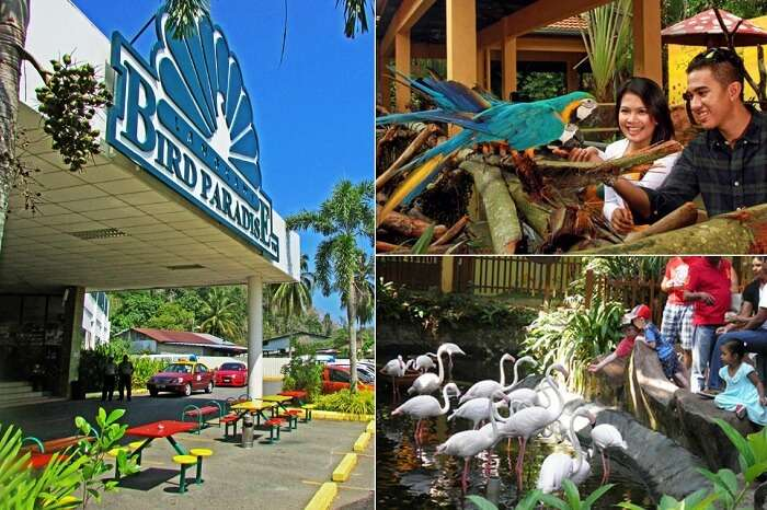 Scenes from inside and outside the Bird Paradise