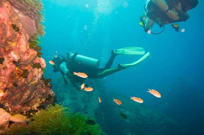 Scuba diving on coral reef at Koh Tao
