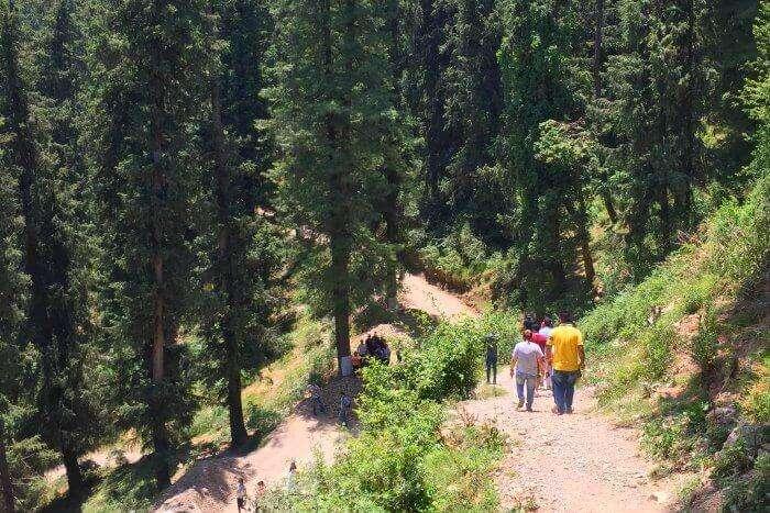 Trekking- one of the best things to do in Mashobra