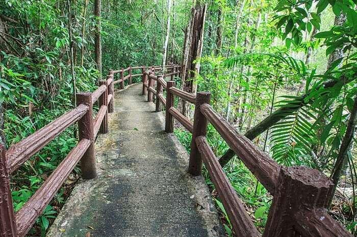 Trek through the dense jungle