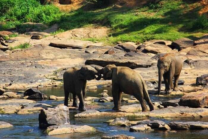 Cute elephants in the orphanage in Sri Lanka