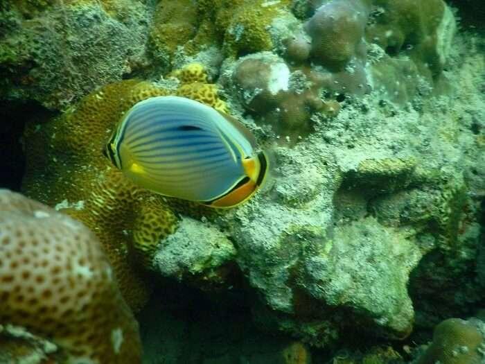 Amazing marine life in Andaman