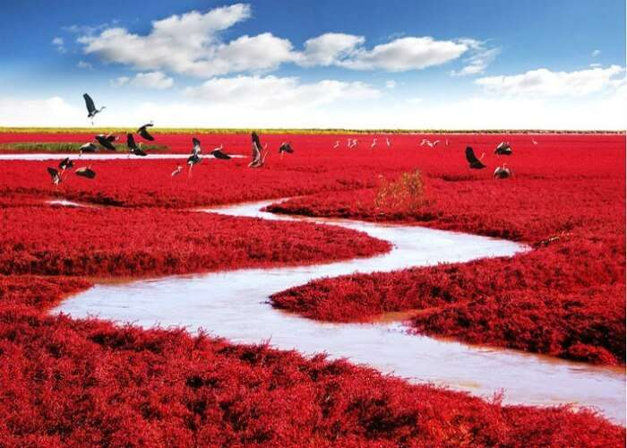 Have a sight of blood red colored beach in China