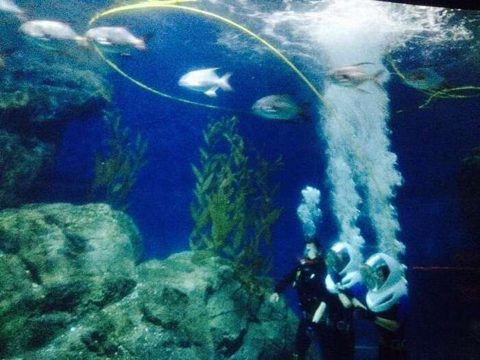 Exploring the various creatures in the Underwater tour