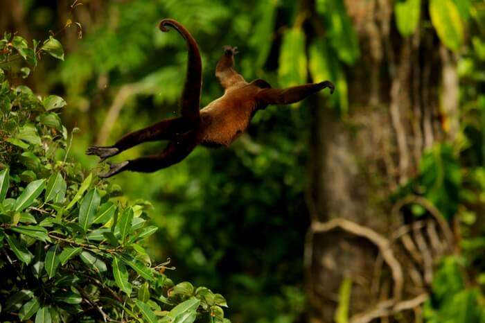 Wild animal in action at Peppara Wildlife Sanctuary