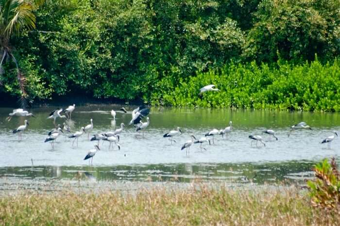 Migratory birds seen playing at Thattekad Bird Sanctuary in Kerala