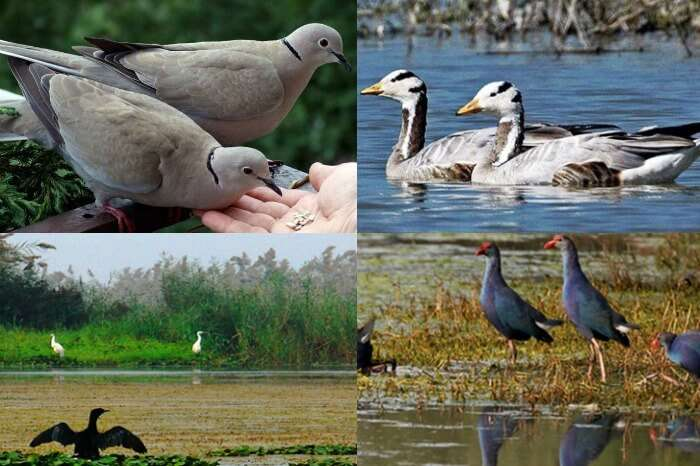 Snaps of the various birds that you find at the Bakhira Bird Sanctuary
