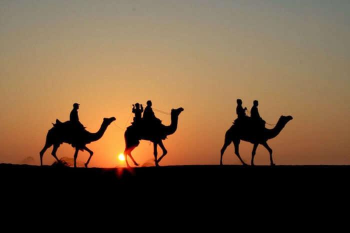 Travelers enjoying camel safari at the time of sunset