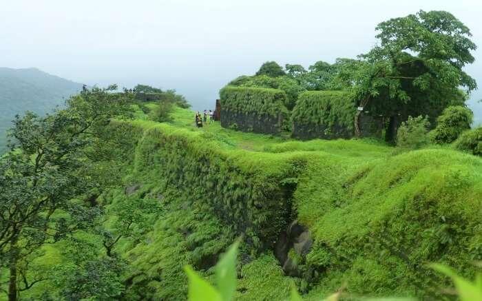 Lush greenery in Karnala - a popular destination for camping near Mumbai