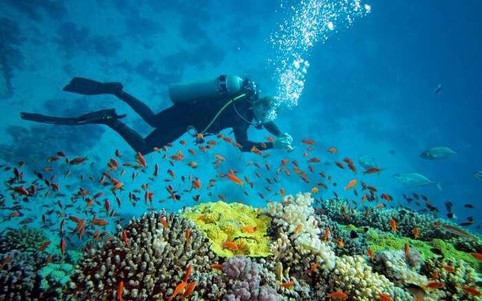 A diver exploring marine world