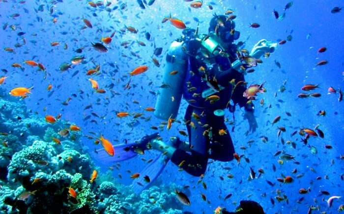 A scuba diver enjoying with school of fishes