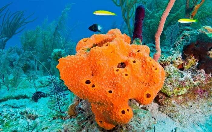 Fishes swimming near an orange sea sponge