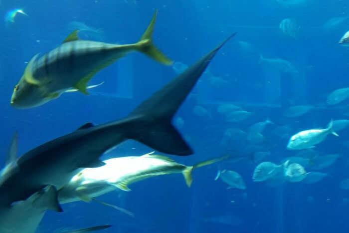 lost chambers aquarium in dubai