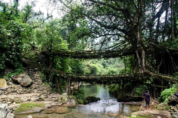 A view of Double-decker Living Root Bridge in Cherrapunji