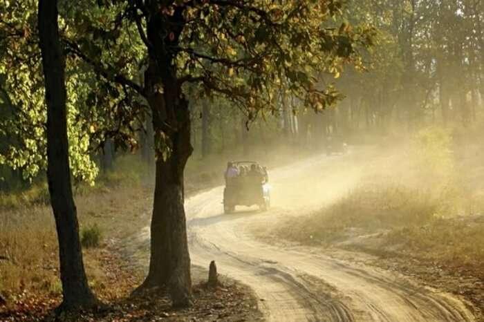 Tourists take a jeep safari through the Kodia Forest in Kanatal
