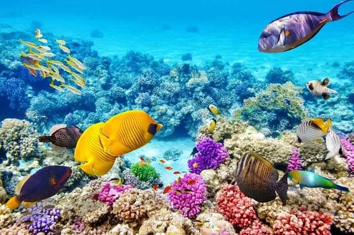 Marvelous ocean life at the Great Barrier Reef