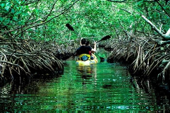 A boat sailing through the mangrove creek in Baratang