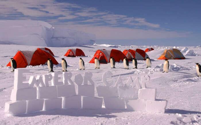 Penguins in Emperor Camp