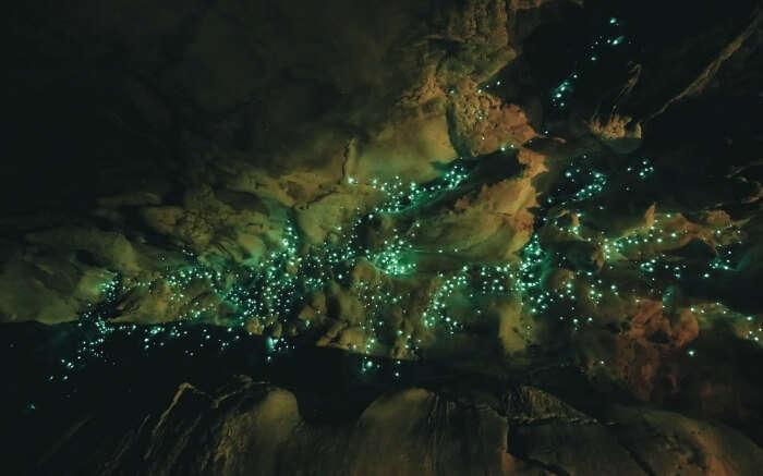 Glowworms inside the Waitomo Caves