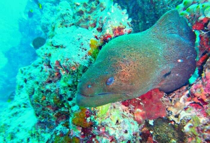 kishor & wife spot eel in corals during scuba diving