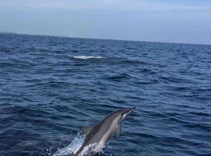 Doplphin spotting in maldives
