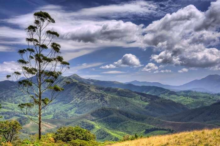 Munnar hills from the top