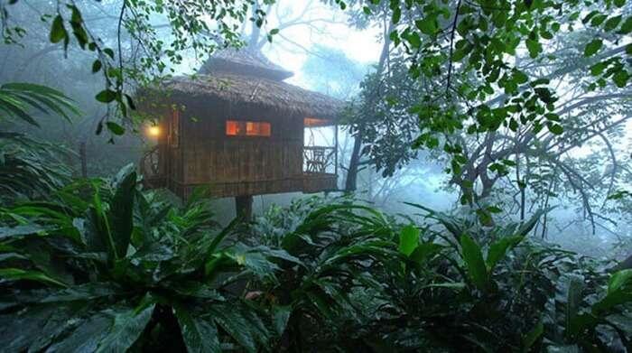 Tree house in Wayanad kerala