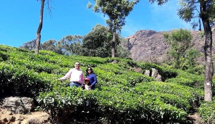 a visit to the beautiful tea plantations of munnar