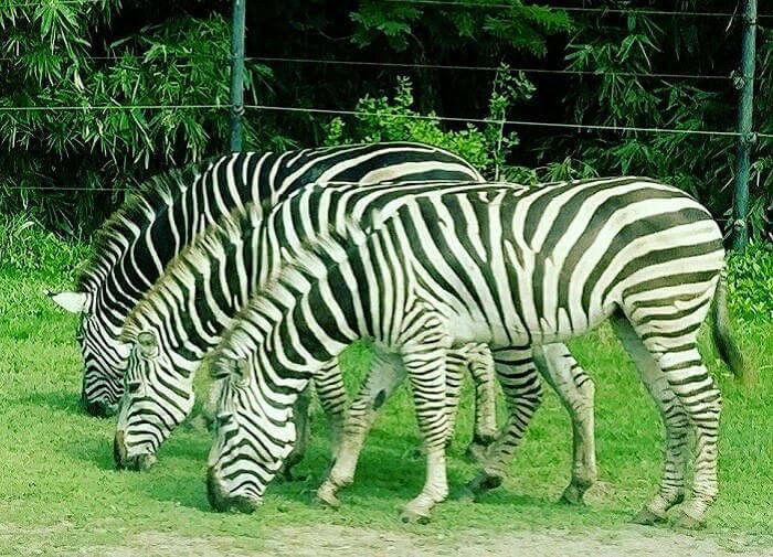 Safari world Bangkok_23rd oct