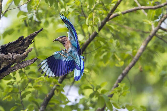 A blue feather bird in Bhutan