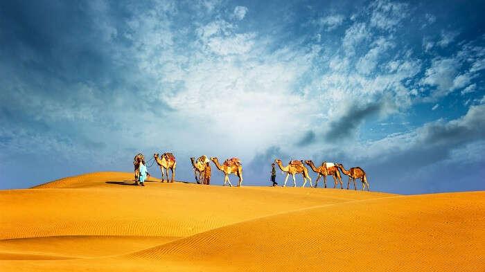 Camel Safari with Dinner in Dubai