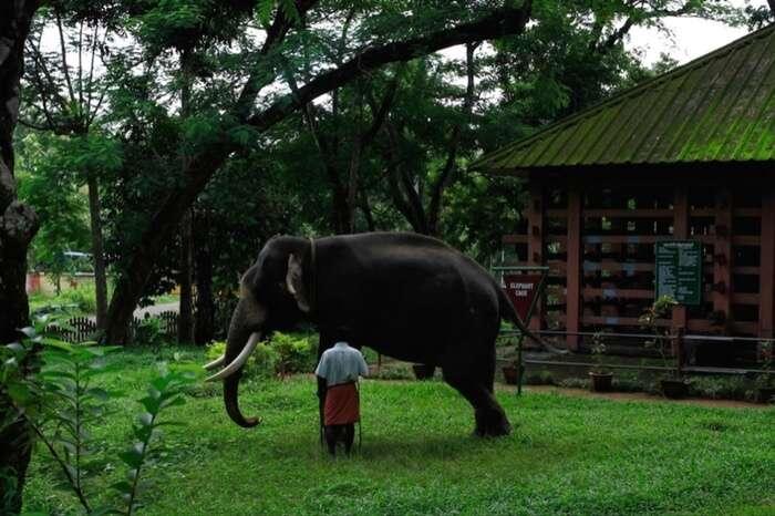 Elephant near an eco-farm in Kerala