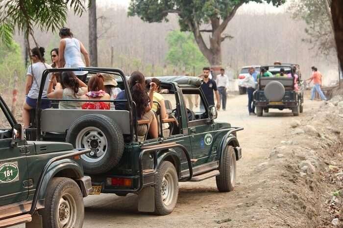 Jeeps leaving for the jungle safari at Jim Corbett