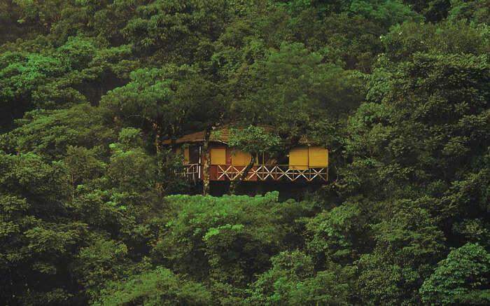A tree house in Kerala