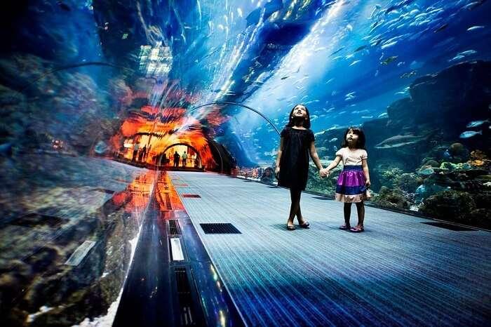 The beautiful Dubai Aquarium